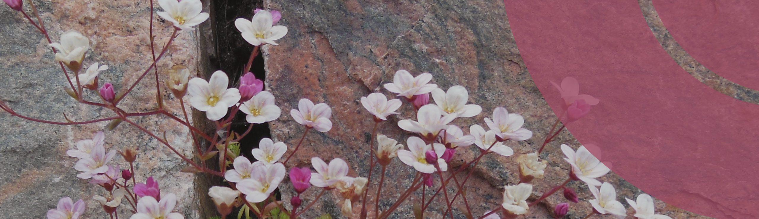 Steinwand mit Blumen | Hospizverein Bayreuth